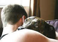 Pets Reduce Stress - Bright Images Subliminal Programs